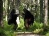 bymella-2012-trollsafari-62
